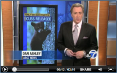 Lake Tahoe wildlife center releases bear cubs into wild!